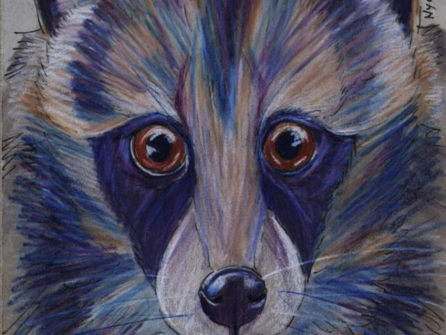 Japan Benefit: タヌキ (Raccoon Dog) (Nyctereutes procyonoides)
