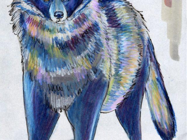 Hibernators Week: Raccoon Dog (Tanuki) (Nyctereutes procyonoides)