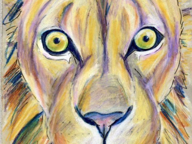 Darwin Days: Lion (Panthera leo)