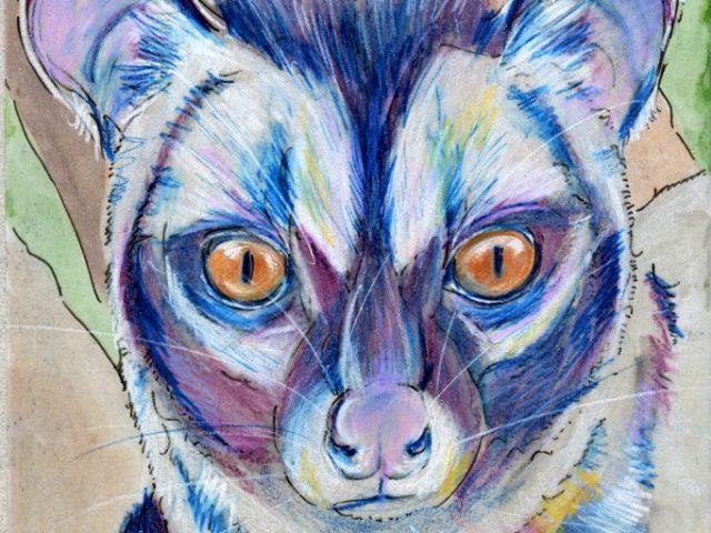 Coffee Achievers Days: Common Palm Civet (Paradoxurus hermaphroditus)