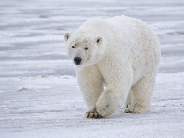 New Feature: Mammal News Roundup