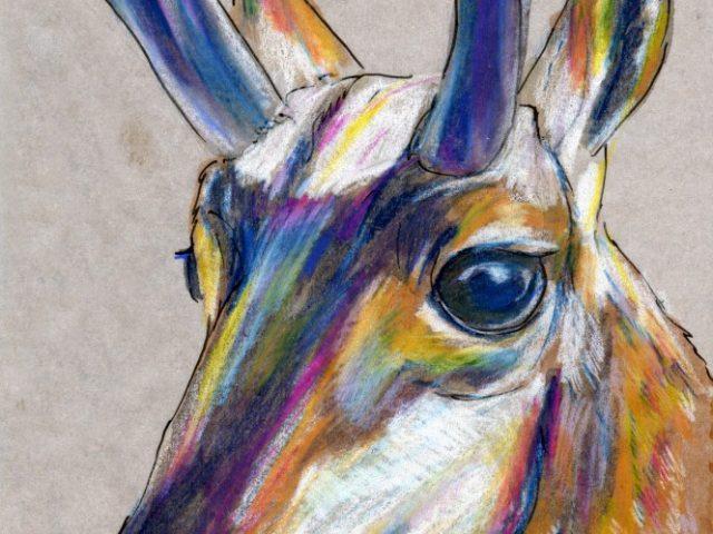 Mammals of New Mexico Week: Pronghorn (Antilocapra americana)