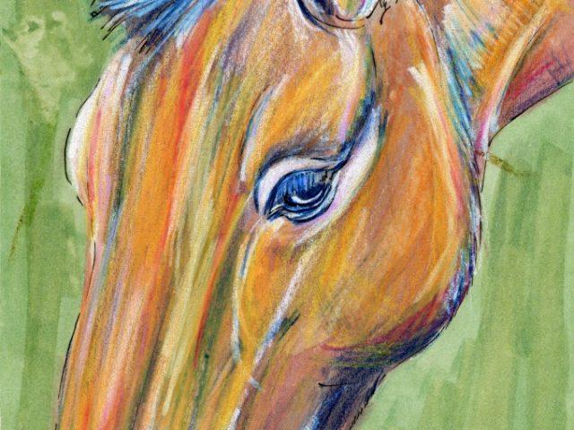 Przewalski's Horse (Equus przewalskii) and a vacation