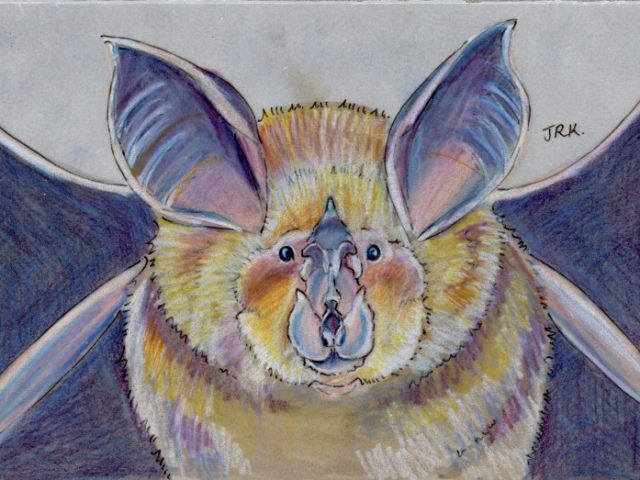 World Cup: Greece's Mediterranean Horseshoe Bat (Rhinolophus euryale)