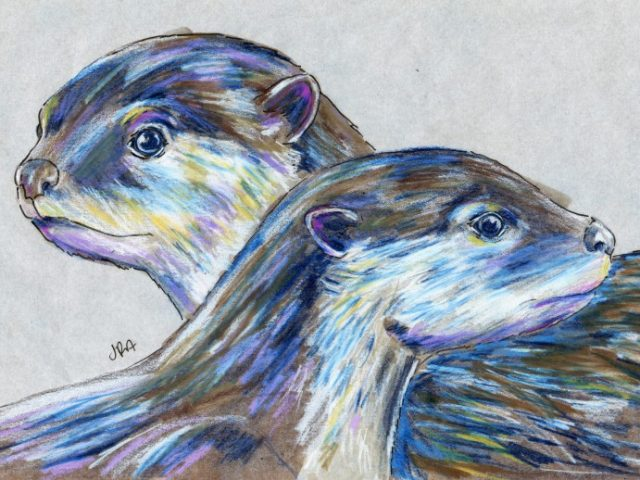 Mammals of Iraq: Smooth-coated Otter (Lutrogale perspicillata)