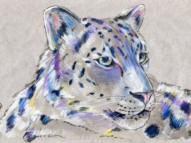 Mammalthon 2: Snow Leopard (Uncia uncia)