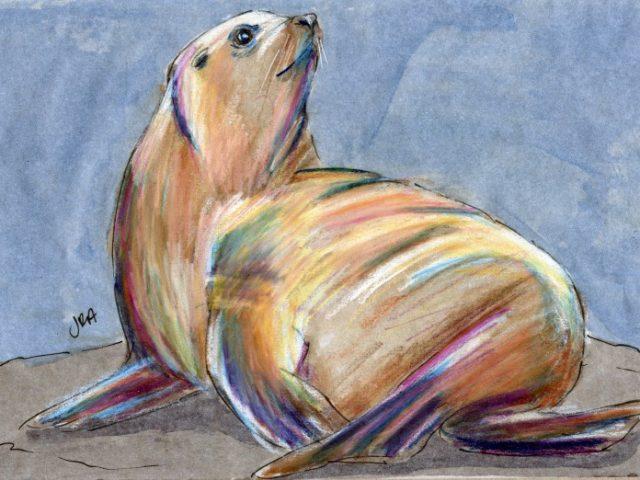 Mammalthon 2: Steller Sea Lion (Eumetopias jubatus)