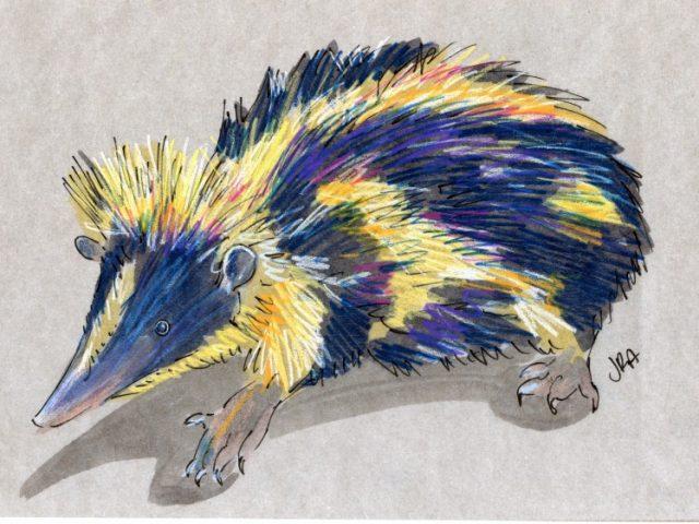 Striped Mammal Week: Streaked Tenrec (Hemicentetes semispinosus)