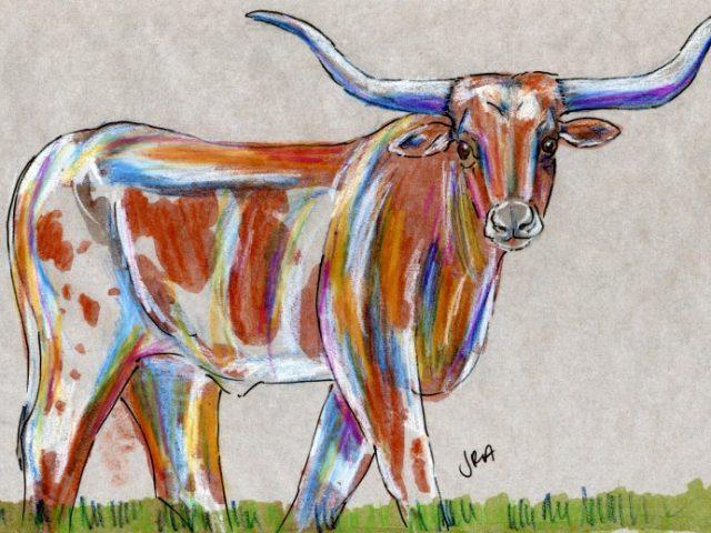 Mammalthon 2: Texas Longhorn (Bos taurus)